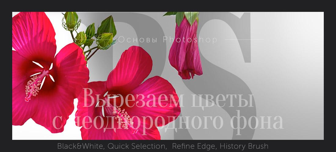 Как вырезать фон в фотошопе: легкий и быстрый способ | 500x1100